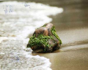 浜辺-2.jpg
